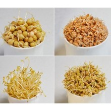 Cereals for germination